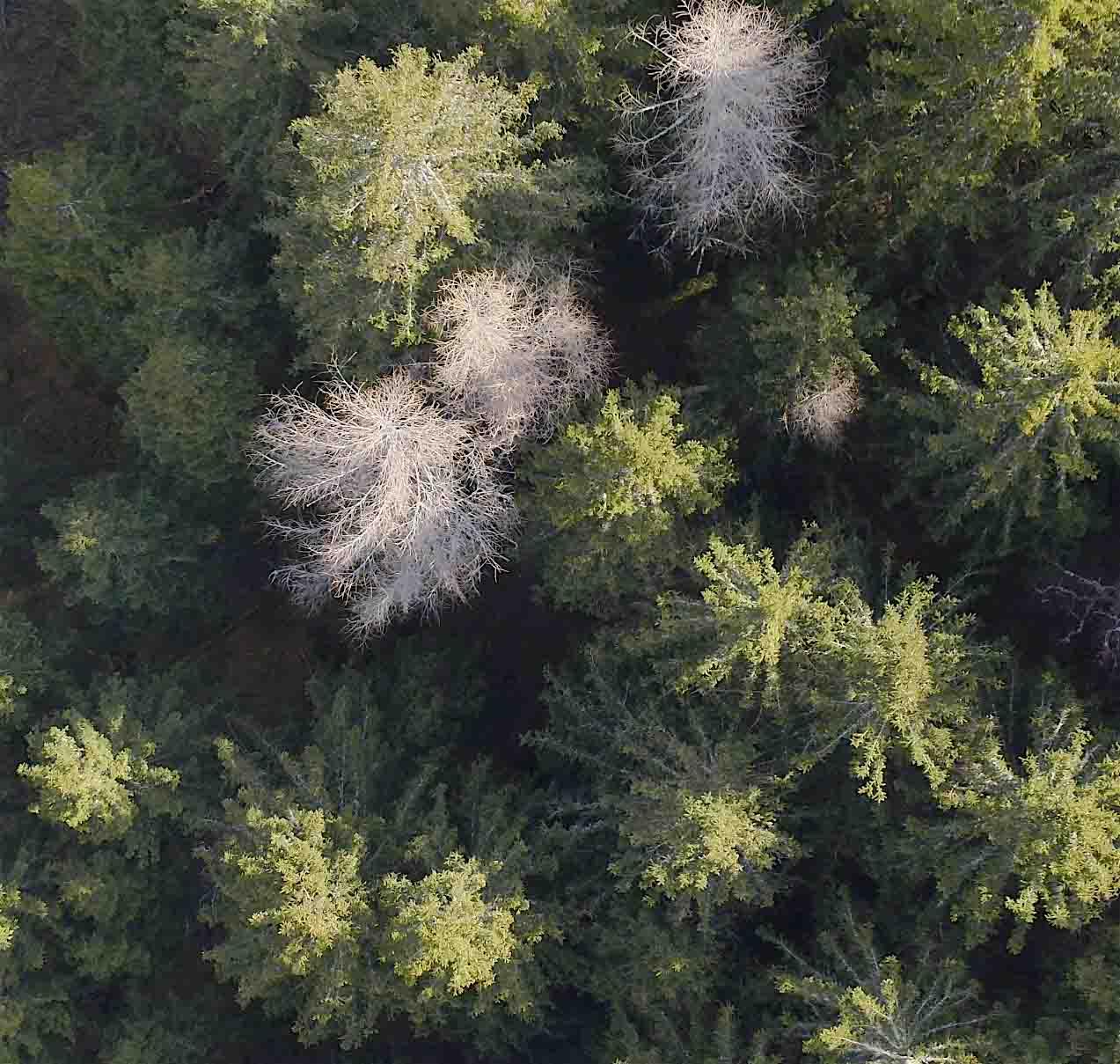 Prise de vue d'une forêt par drone