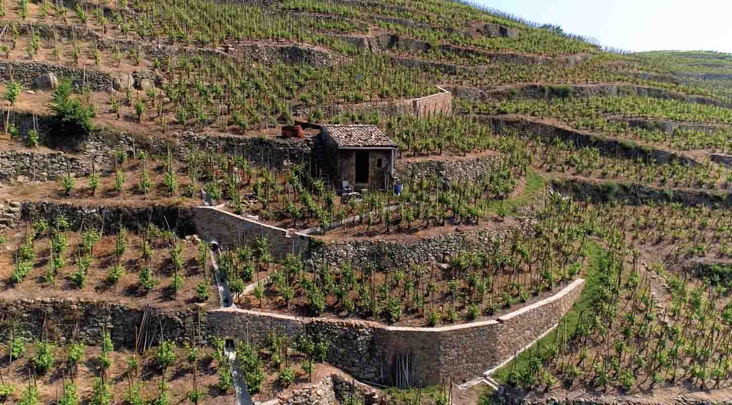 Vigne en coteau face Vérin Loire film aérien drone