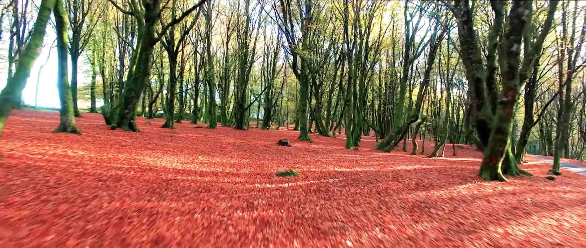 Forêt rouge Nièvre film aérien Drone