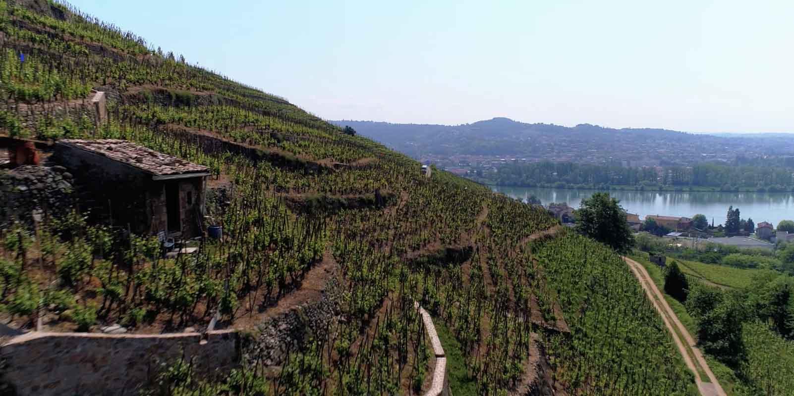 vigne en coteau Vérin Loire film aérien Drone