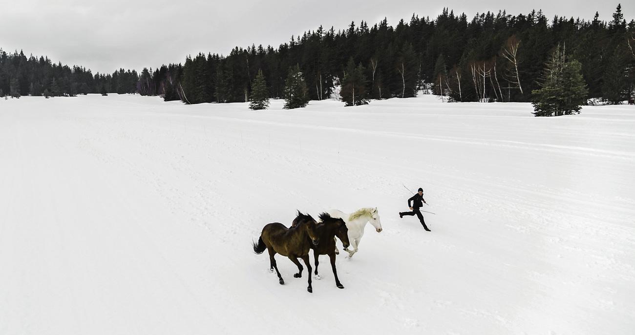 Chevaux qui court dans la neige en montagne vu par drone